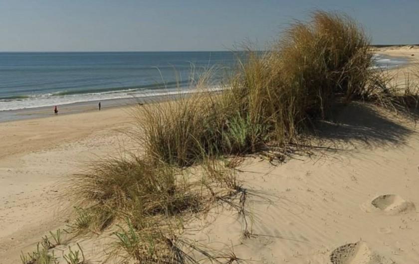Location de vacances - Chambre d'hôtes à Grayan-et-l'Hôpital - Grayan-et-l'hôpital Plage sauvage de dunes
