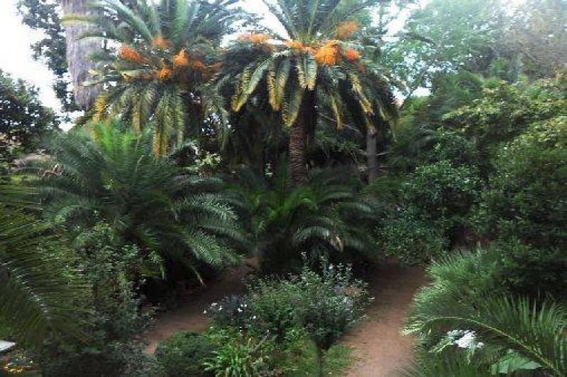Location de vacances - Appartement à Collioure - vue de votre terrasse