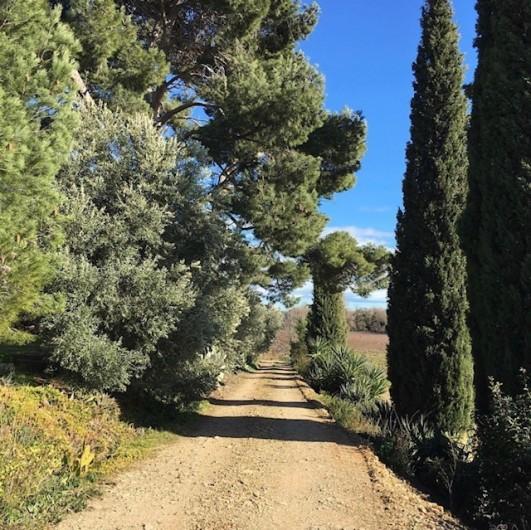 Location de vacances - Gîte à Mirepeisset - Accés au bas du domaine, vignoble