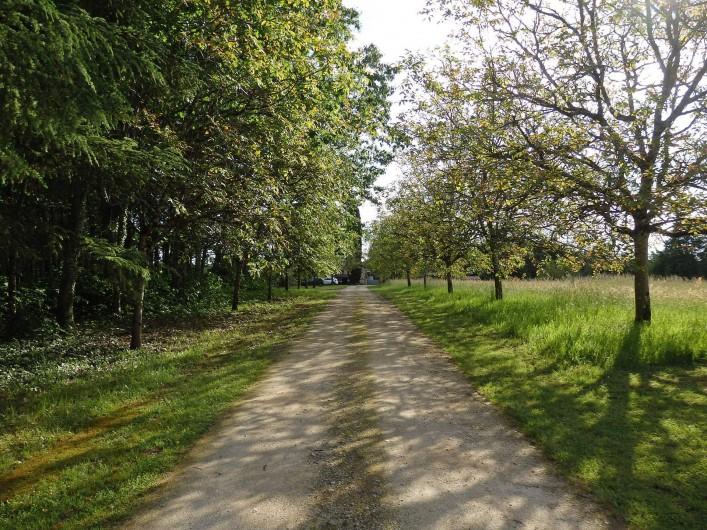 Location de vacances - Gîte à Bouillac - Le chemin d'entrée sur la propriété, bordé de noyers