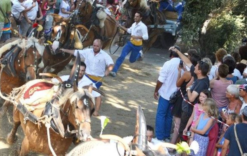 "Location de vacances - Mas à Barbentane - Découvrez  les traditions provençales,  ""carreto ramado"", abrivado, encierro"